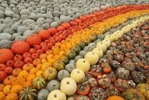 Pumpkins / by Lara Cupit