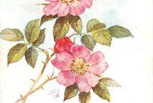 Inspiration - flowers