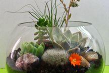My Terrariums, Tillandsia & Succulents