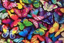 Butterflies / by Char Dilnik