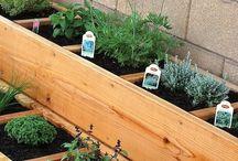 herbs,herbs....garden