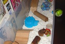 Hamster ideas