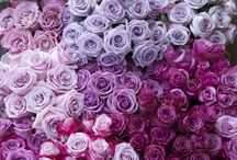 radiant orchid wedding / by BeautifulBlueBrides