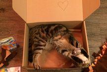 Cicaláda / Meglepetésdoboz macskáknak, amely játékokat, jutalomfalatot, és kézzel készített, egyedi termékeket tartalmaz.