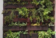 Plant feature wall
