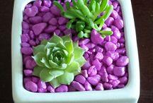 plante minunate