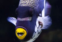 Fish + Underwater