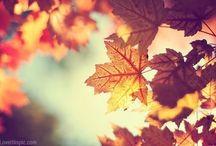Herfst  / Welkom herfst, welkom. Dag lieve zomer je was mooi.