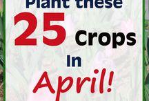 groente planten kalender