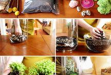 glasen poten planten
