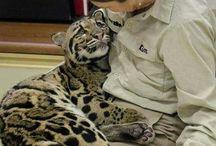 Jaguars,leopards,cheetahs....bautiful creautures!