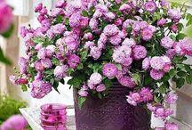 Bouquets di fiori / Bouquets