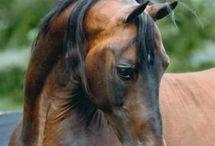 Equine Passion