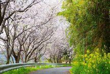 Landscapes in Ainoshima Island