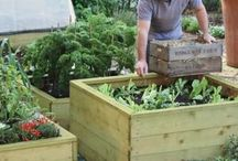 Gardening in Wooden Raised Beds / Raised bed gardening is a real favourite of 'grow your own' vegetable gardeners as they allow you to grow vegetables in otherwise unsuitable soil or locations .  http://www.harrodhorticultural.com/raised-beds-and-planters-tcid1.html