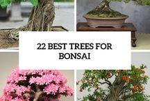 bonsai,type,size,do's e don'ts,care of