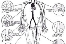 Anatomi (Human Anatomy)
