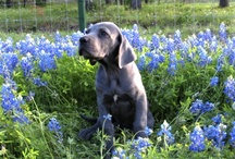 Pets in the Bluebonnets!