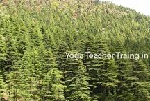 Mahi power yoga Dharamsala
