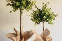 pour les plantes