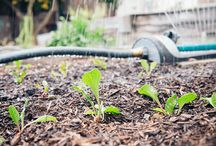 Water-Saving Tricks / Water-saving strategies for your yard and garden.