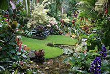 tropiske hager