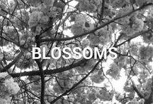 ♥ SPRING BLOSSOMS ♥