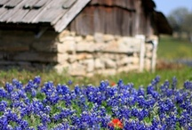 Sweet Home Texas / by Donna Haggard
