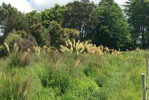 Re vegetation projects / Jenny villiger landscape re vegetation projects