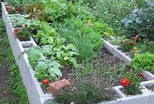 Raised garden bed - letto rialzato