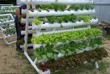 Hydro Vegetable garden