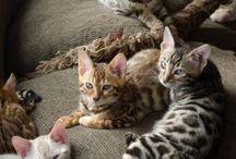 koty / Sweet cats