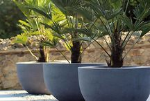 Planters & Pots / Planters & Pots for trees and plants
