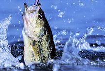 I Love Fishing / by Charlene Hornbaker Mulcahy
