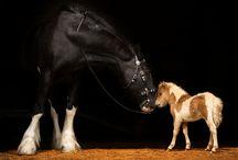 Horses ♡