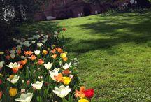 Messer Tulipano - Castello di Pralormo