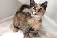 cats / catcatcatcatcat