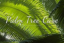 Help & Advice / Help & Advice from Athelas Plants on how to look after your Palms, Acers, Bamboo, Bougainvillea, Arids and more plants, trees, and shrubs advice