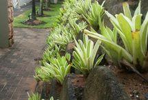 plantas muro contención