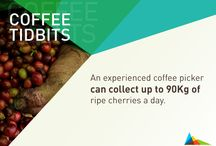 Coffee Tidbits / Small facts, big knowledge! This is what our Coffee Tidbits are, snippets of information straight from origin that will feed your coffee knowledge.