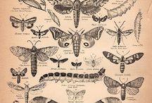Nature Art Graphics