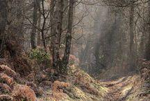 Surrey Hills UK
