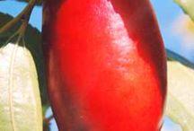 Frutas africana