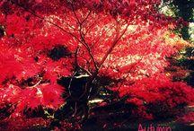 Autumn / Oggi è ufficialmente iniziata la stagione autunnale, ma ancora - grazie soprattutto alle belle giornate - si ha il ricordo dell'estate, del caldo, dell'allegria che questa ha lasciato.   Il mio outfit di oggi è autunnale, ma al tempo stesso presenta alcuni dettagli - come la giacca colorata ed i sandali - che profumano ancora d'estate!