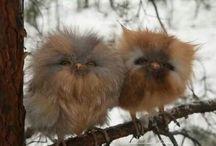 Yavru baykuşlar