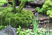 ogród mech