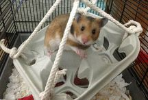 Hamsterr