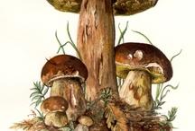 Bilder svampar
