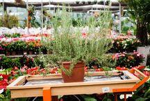 Plantas para limpeza de energias