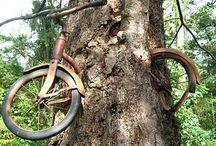 vélo dans l'arbre